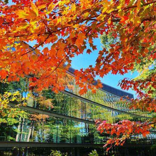 Fall foliage in front of the mirrored windows of the Undergraduate Teaching Lab